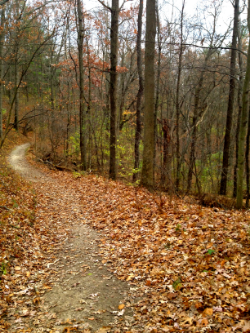 The_path_-_Erin_Aquin