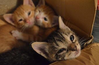 sad kittens
