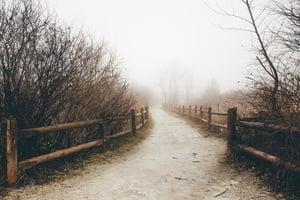 path-on-foggy-day_925x