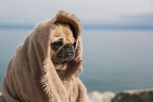 wise-pug-thinking-about-the-world_925x